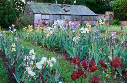 Irises at Bridgford