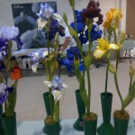 British Iris Society Summer Show