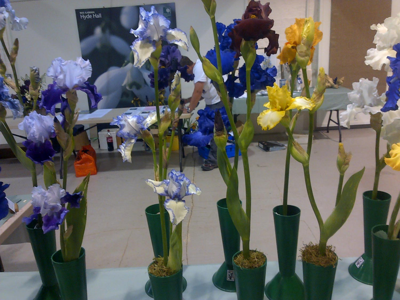 British Iris Society Summer Show