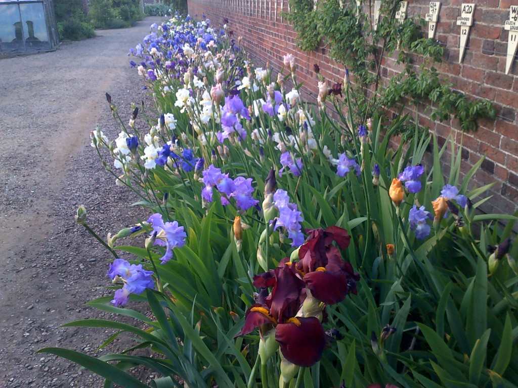 Doddington Hall Display Border June 2015