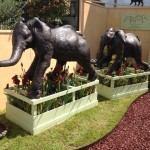 Our Red Pike irises with Suzie Marsh's marvellous elephants