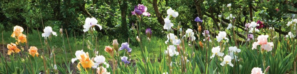 Buy Our Irises
